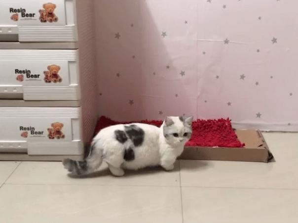 房东不让养宠物,却被两张小猫咪的照片逆转了!