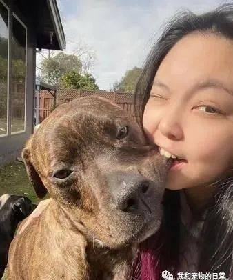 比特犬遭咬嘴边肉,表情超级无奈!