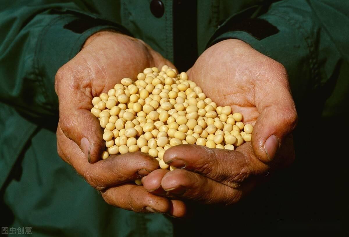"""中国购买了2600万吨美国大豆,大豆行业""""卡住了脖子""""。今年还有一亿吨"""