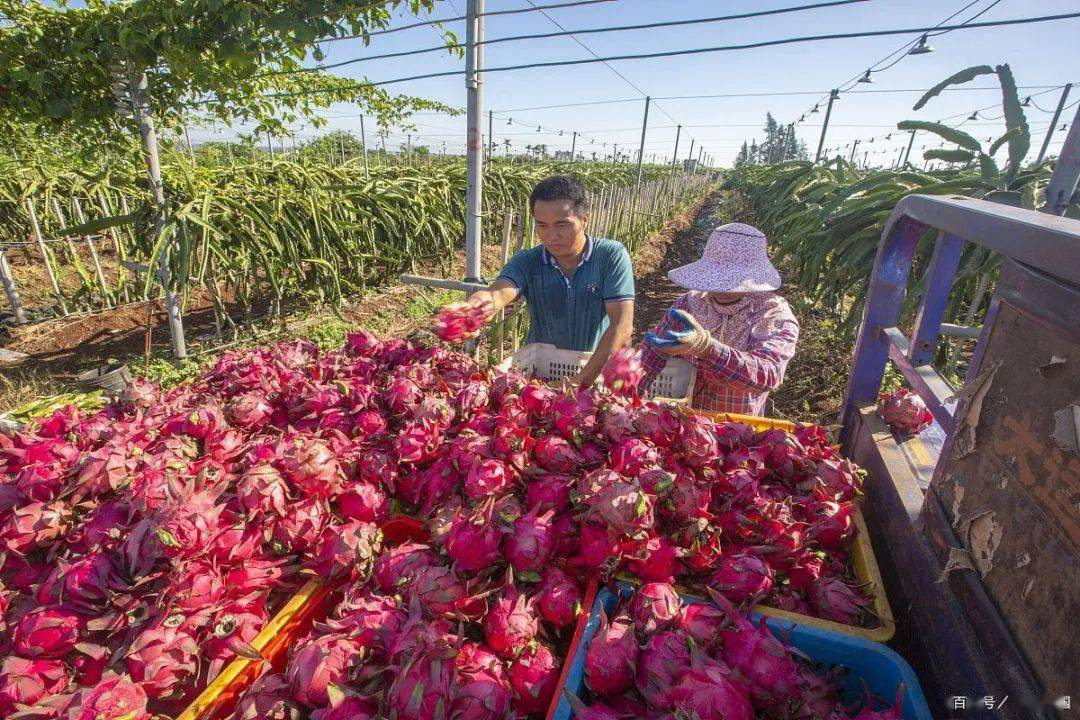 """涨价:从3元1公斤到6元1公斤,市场""""反弹""""!农民:一亩多赚700块!"""