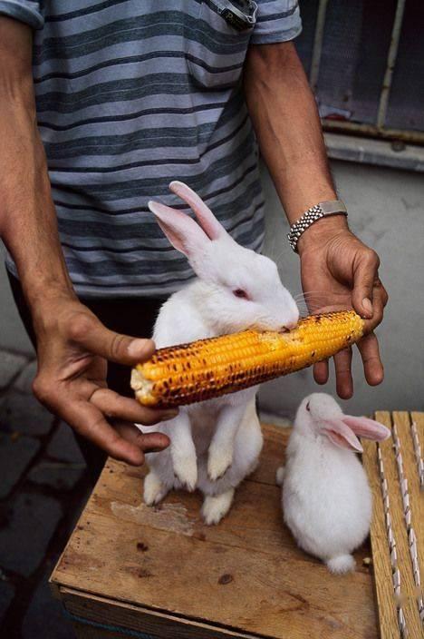 向居住在同一地球上的动物致敬