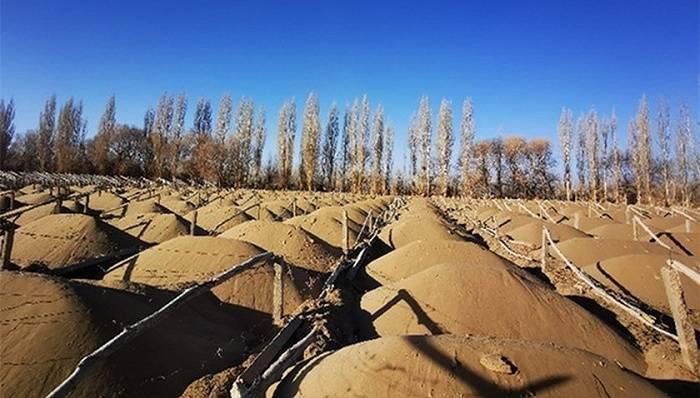 """""""敦煌毁林案"""":13300亩还是6000亩?有图有真相"""