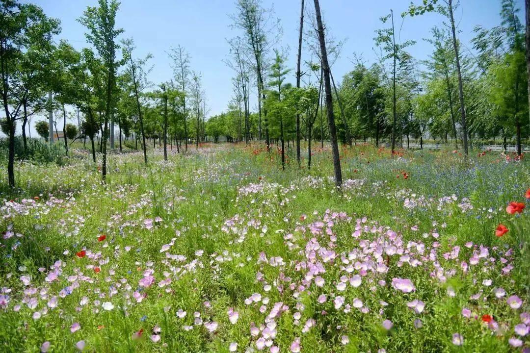 快了!徐州国家级湿地公园+1