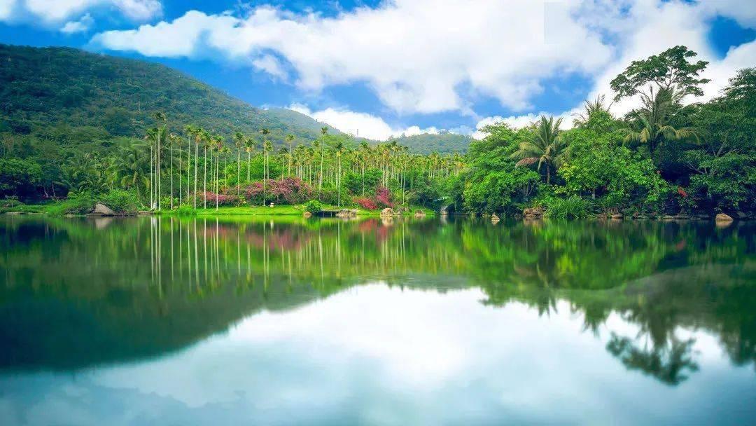 """0元送热带雨林门票!岛内这个避世小镇,藏着让人""""醉氧""""的原始热带雨林,快来打卡!"""