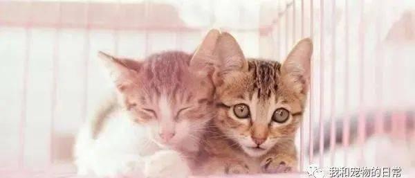 睡觉突然觉得大腿又温又热,掀开棉被一看竟发现胯下生出猫!