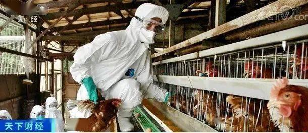 警惕!7人感染!全球首次发现人感染这种病毒!不排除今后人传人