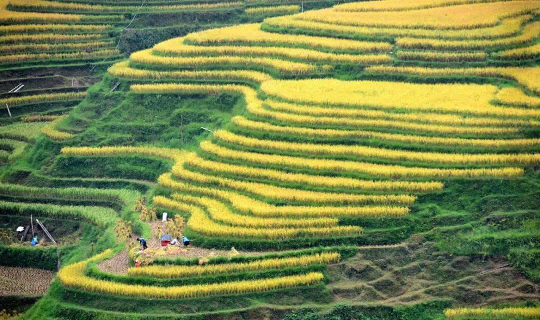 权威面对面|以全面推进乡村振兴促进中华民族伟大复兴——访中央农办主任、农业农村部部长唐仁健