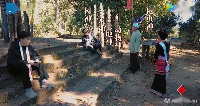 苏州天辰怎么注册万里走单骑 | 景迈山:一片古茶林为何能申遗