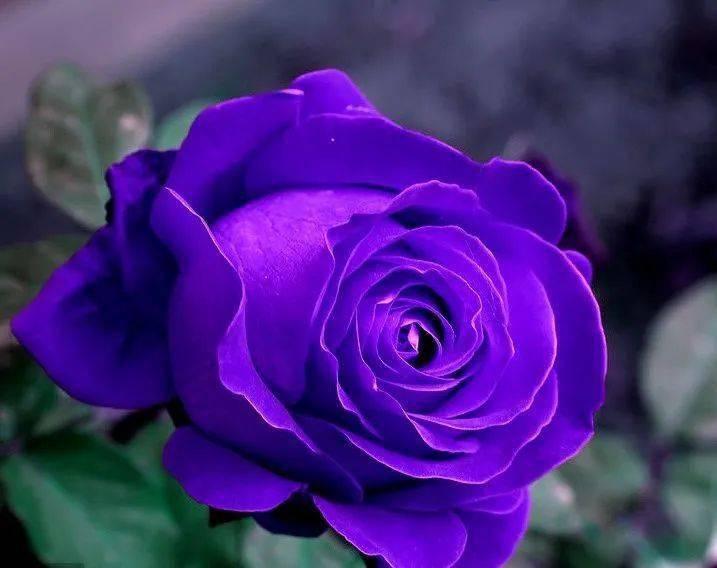 心理测试:选出你最喜欢的花,测出你在哪些方面最令异性着迷