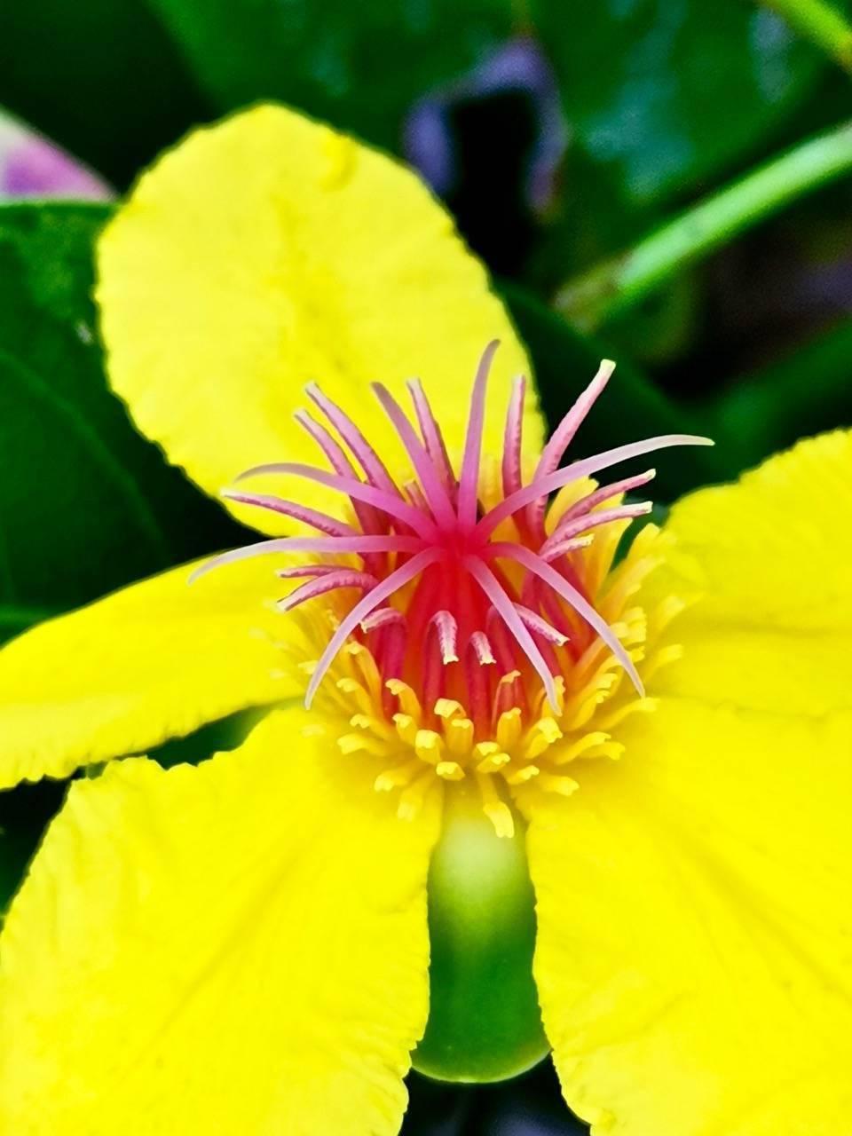 正月十五鲜花图,花型各异真是赏心悦目