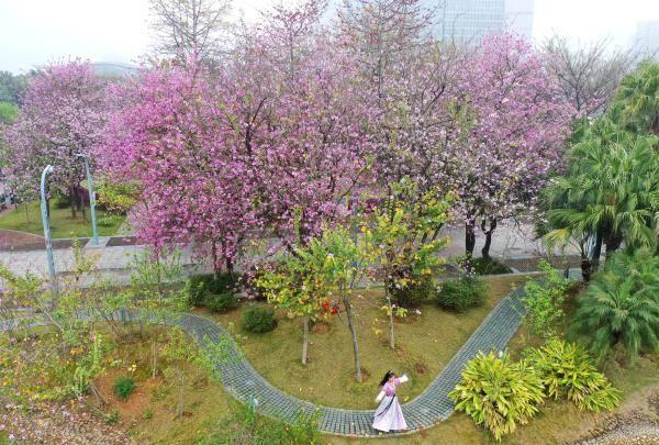 广西柳州:姹紫嫣红春意浓