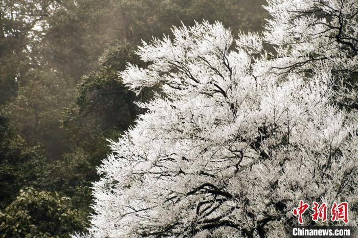 四川古蔺夜间降雪 虎头山上再现雾凇景观
