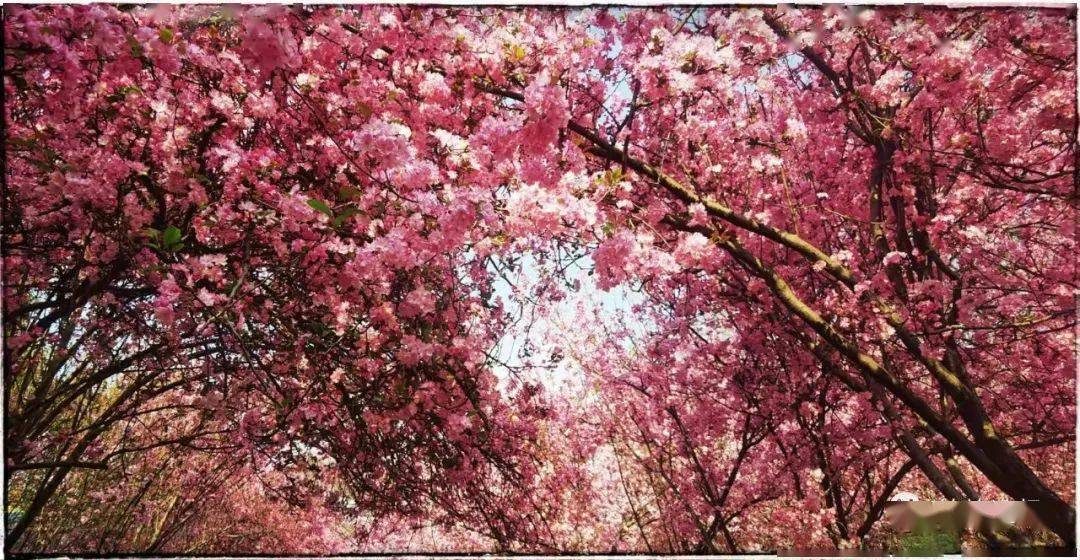 鲜花 ~ 为女神盛开