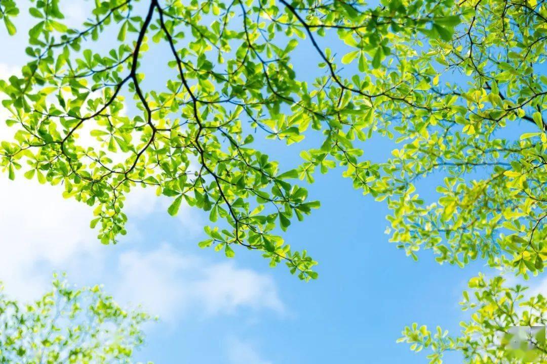 七星彩:26个春天的成语,原来都出自诗词 网络快讯 第10张