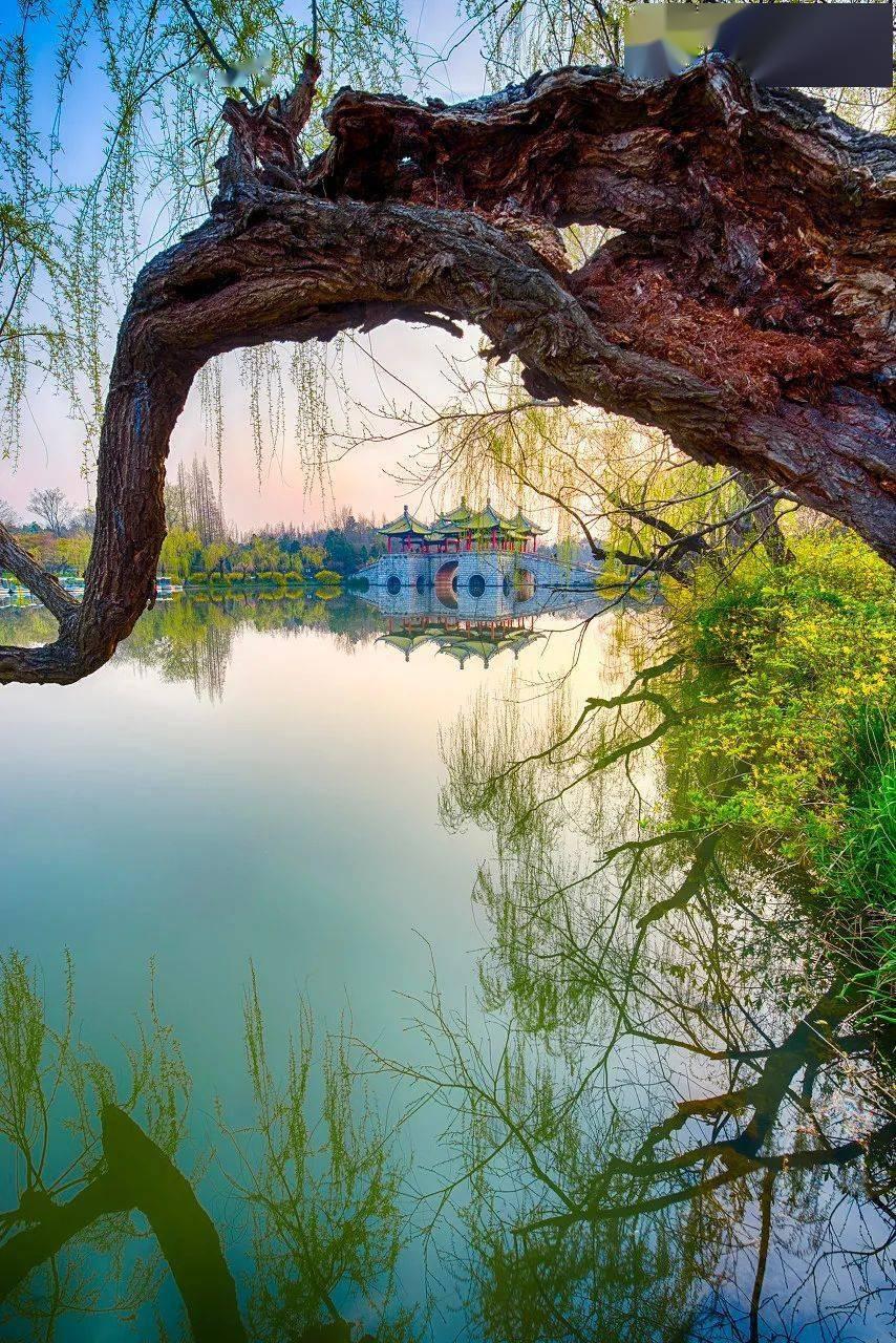 一到春天,扬州就惊艳了全世界