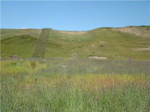 紅原草原生態治理取得顯著成效