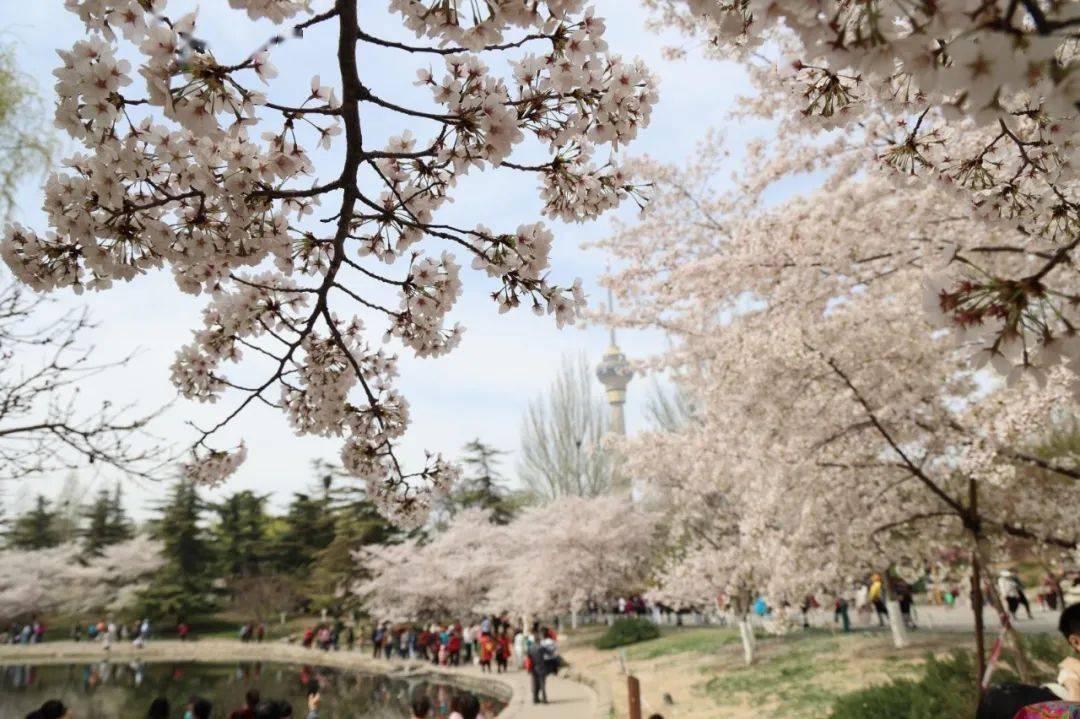 清明节北京市属公园游客突破164万!这5家公园打卡人数最多
