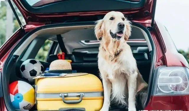 狗狗坐在副驾睡翻了:面对这种难题,一律建议熄火处理!
