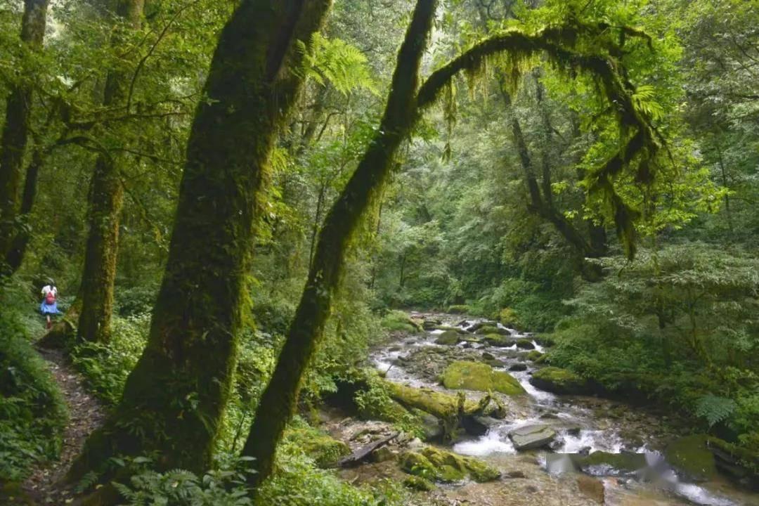 沿着高速看中国|这条AA级景区高速,带你穿过热带雨林看野象!