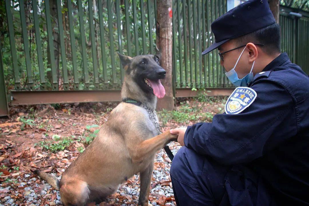 警犬故事 大成与乐迪的10个约定
