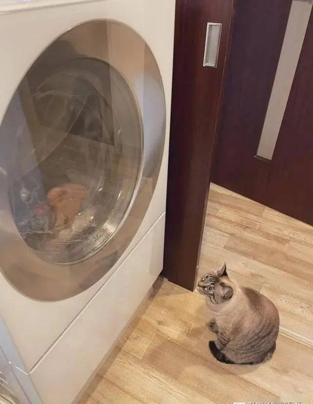 女儿在玩玩具厨柜时,家里的猫猫突然从水槽中冒了出来!