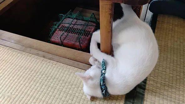 跟着气象渐热,主人把暖炉收了起来,然而猫却不干了!