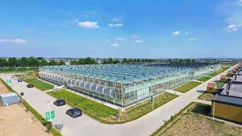 """""""问道乡村振兴·我们向寿光学什么""""② 到处是蔬菜种植的""""黑科技"""",蔬菜王国里看见农业新未来"""
