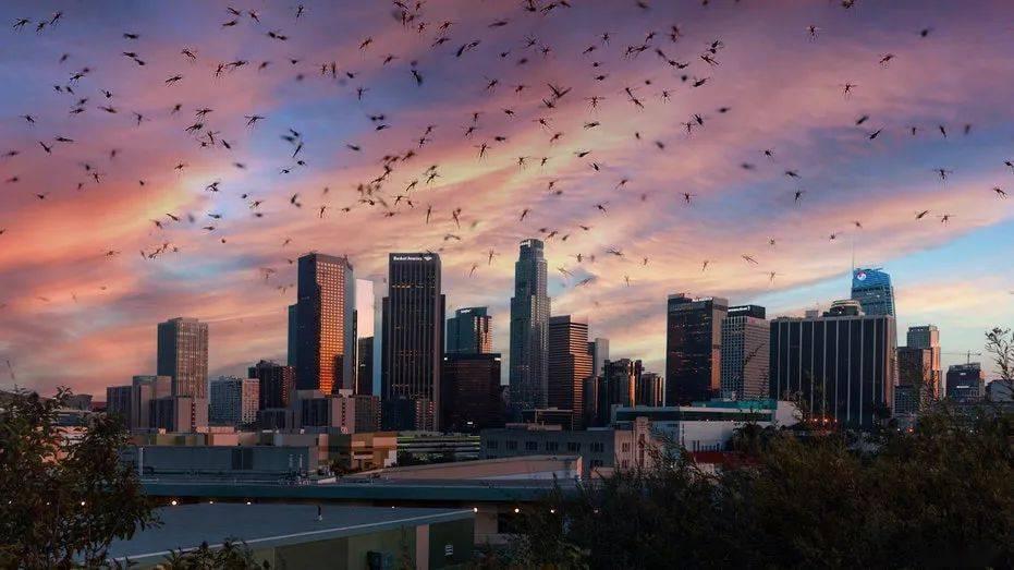 蚊子排行_杀人最多的动物,蚊子排第三,人类排名让人时刻警醒