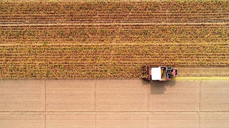 国产大豆之困:对外依赖超80% 大豆之乡陷低产困局_我国