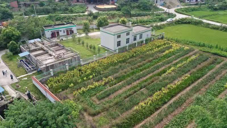 """重庆铜梁:污水处理厂""""变身""""生态湿地 探索生态治污新路径"""
