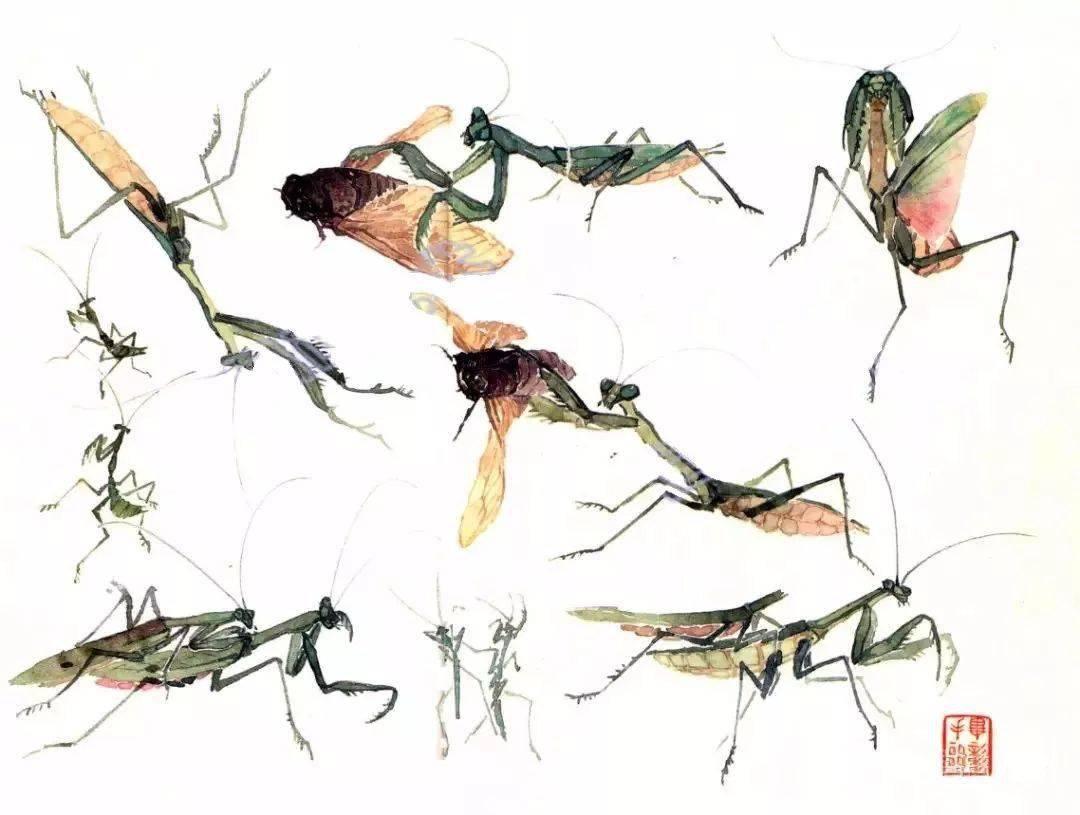 超详细 没骨昆虫 画法分享!  昆虫怎么画