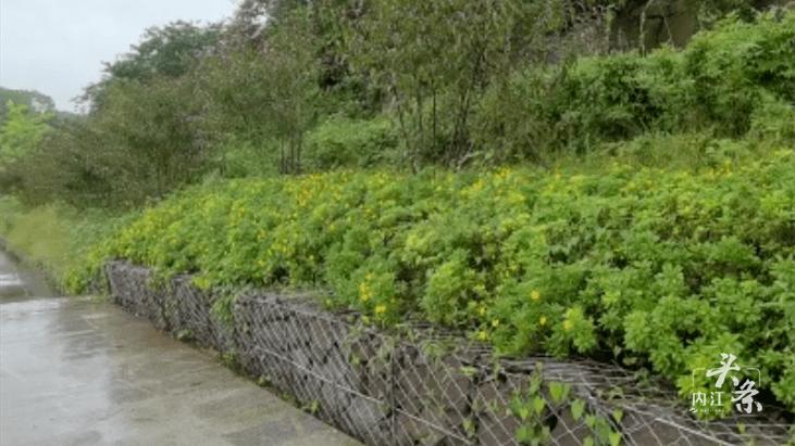 生态景观工程1900余平方米!内江新增一处休闲散步好去处