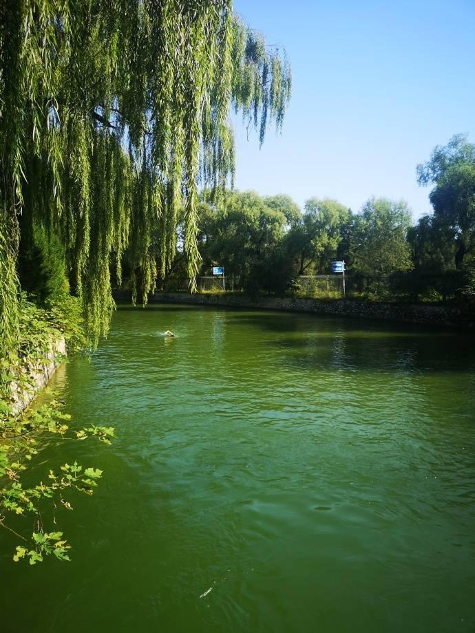 颐和园的冬游一年四季依然雷打不动